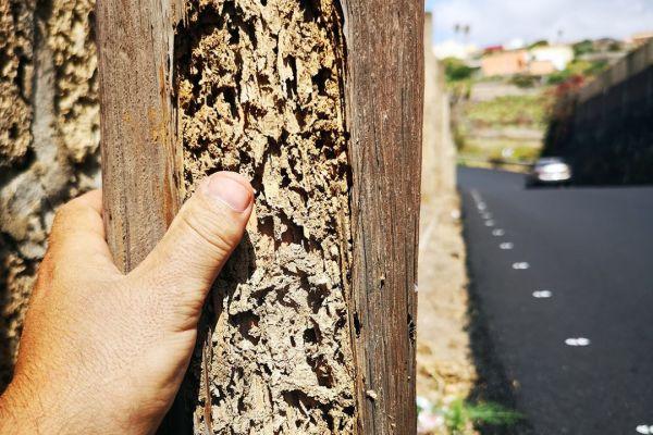 termitas-tacoronte-7-grande476ee2bc-5554-9a4f-062e-dc4b6c153fadBAB2F09E-FDAA-44B3-ACEA-87A3EBD9581B.jpg